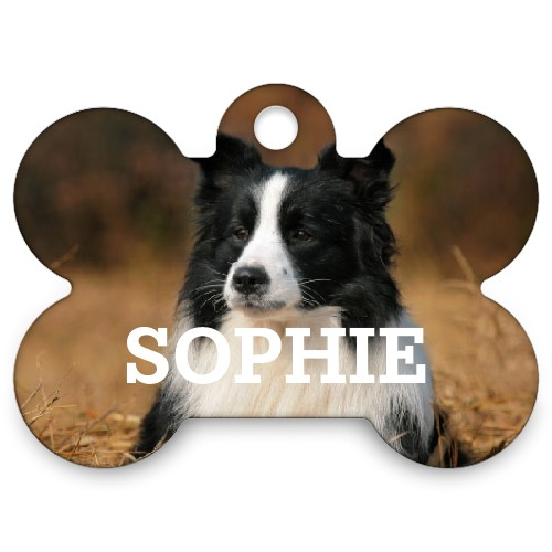 Photo Gallery Dogbone Pet Tag Multicolor