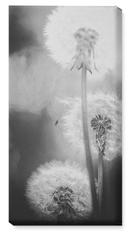 dandelions wall art