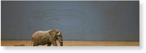 Elephant And Zebra Wood Wall Art, Single piece, 12 x 36 inches, White